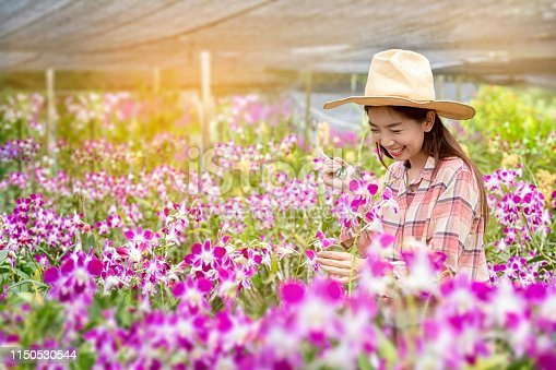 Happy Female farmers are harvesting orchid flowers for sale. Beautiful woman working in the orchid farm. Purple orchid in garden of thailand.