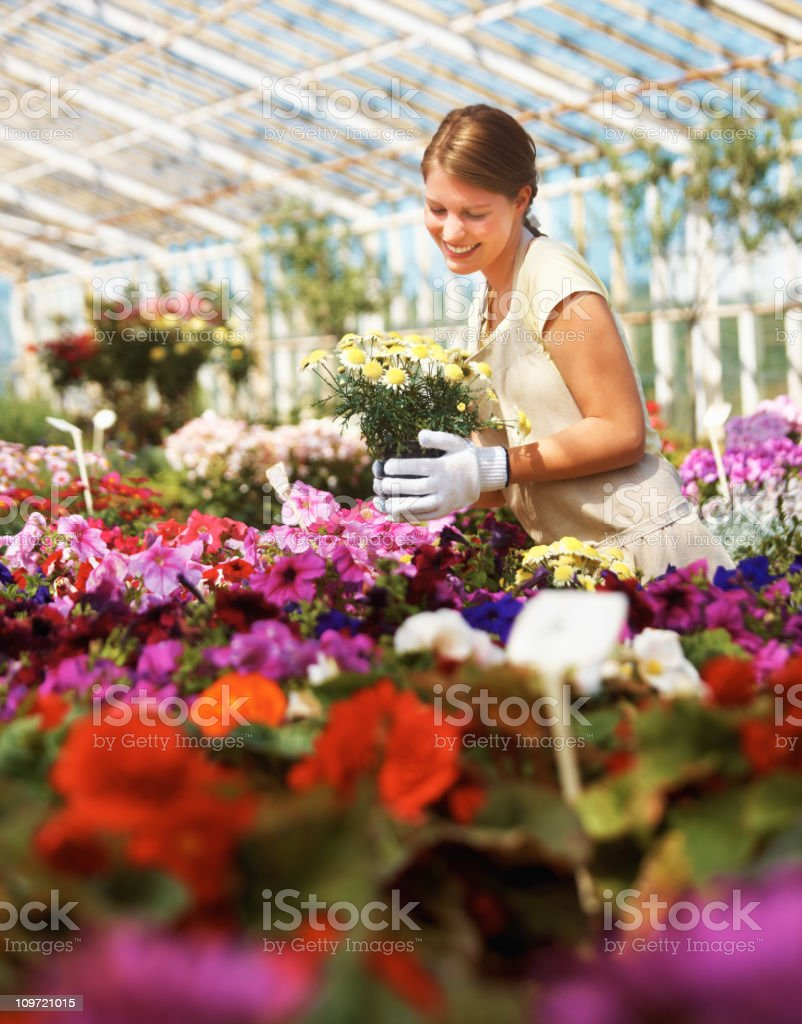 Happy florist holding flowers in a greenhouse royalty-free stock photo