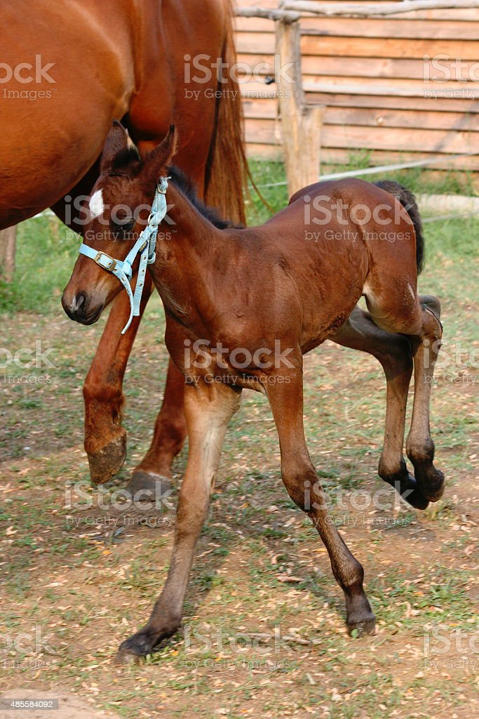 Happy foal stock photo