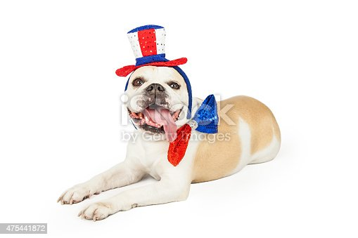 istock Happy Fourth Of July Bulldog Laying 475441872