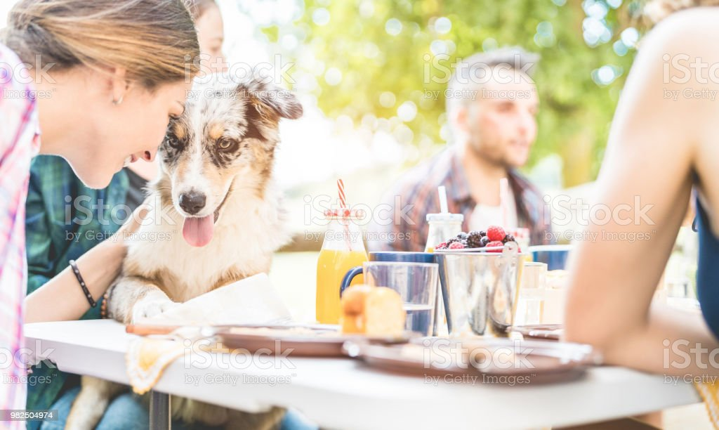 Happy friends doing breakfast brunch meal in nature with home pet - Young people having fun with dog in weekend day eating fruits and drinking smoothie - Focus on animal face - Food and summer concept stock photo