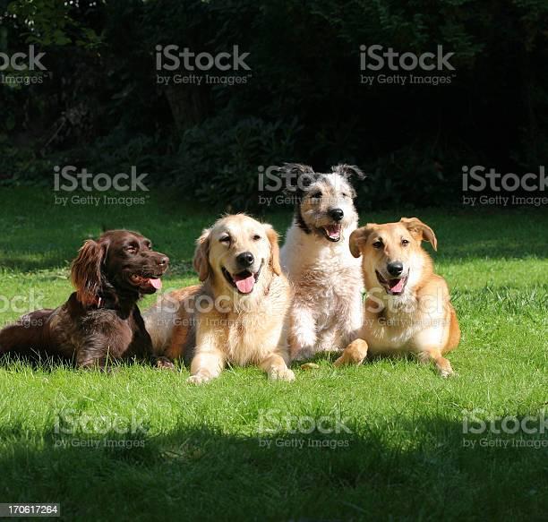 Happy friends picture id170617264?b=1&k=6&m=170617264&s=612x612&h=xr74fdvhdbj fa6o3ujo1ruka z2un65cu0ycivg45m=