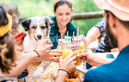 istock Happy friends toasting healthy orange fruit juice at countryside picnic - Friendship concept with alternative people having fun together with family dog on afternoon relax time - Vivid bright filter 1206646250