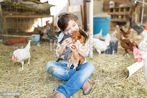 Adorable Caucasian girl hugging chickens while undergoing animal assisted therapy at farm