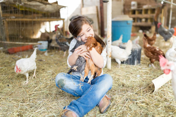 Happy Girl In Love With Chickens stock photo