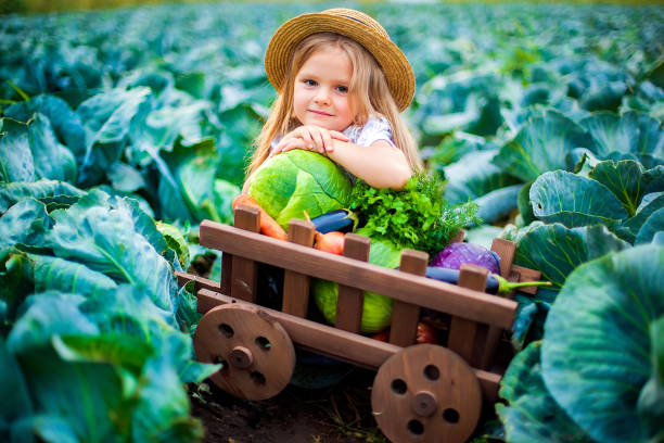 happy girl in straw hat on cabbage field with basket of vegetables - pesche bambino foto e immagini stock