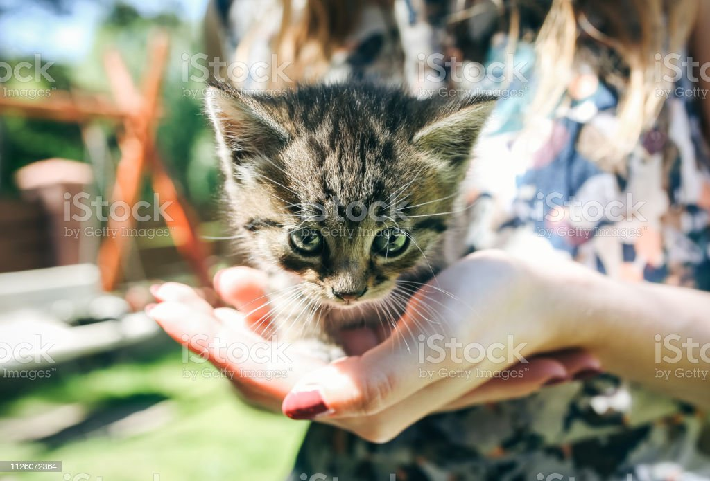 Happy girl with bright nails is holding small cute kitten in her...