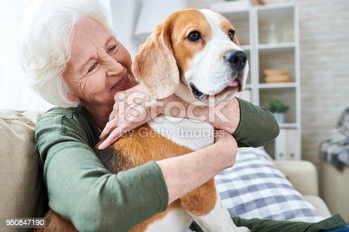 istock Happy granny loving her dog 950847190