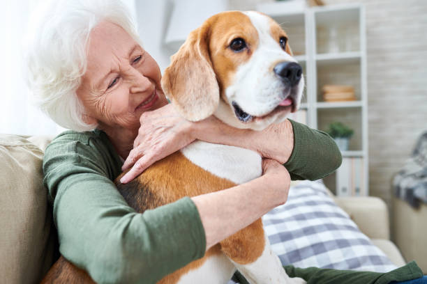 happy granny loving her dog - geriatrics stock pictures, royalty-free photos & images