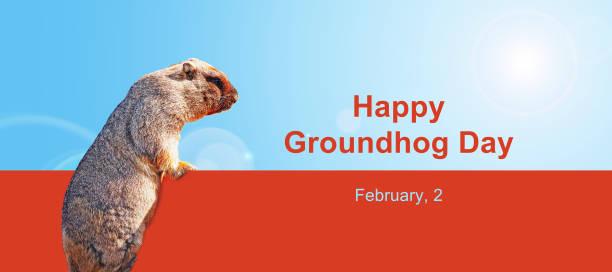 feliz día de la marmota, febrero, 2. la fortuna habla del tiempo en primavera.  bonita marmota - groundhog day fotografías e imágenes de stock