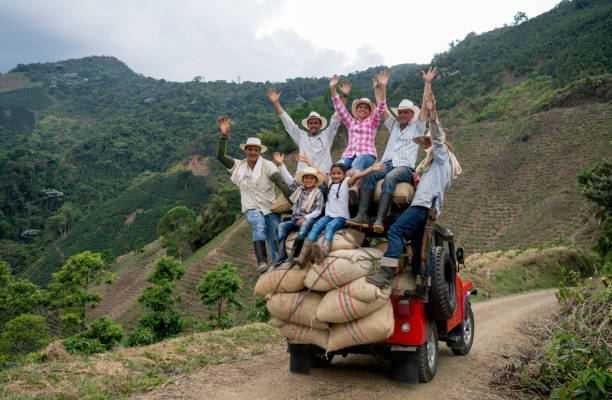 happy group of farmers transporting coffee on a car - colombia stock photos and pictures