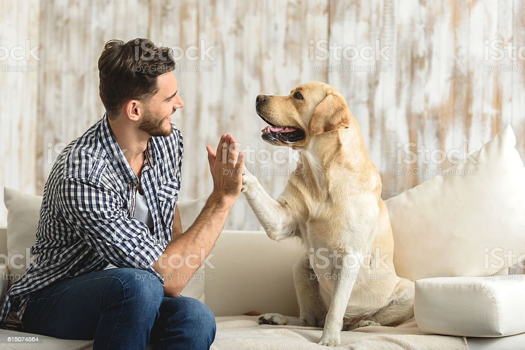happy guy sitting on a sofa and looking at dog stock photo