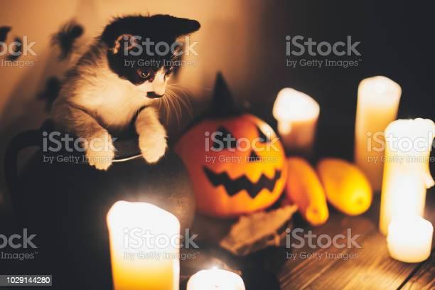 Happy halloween black kitty sitting in witch cauldron and jack o picture id1029144280?b=1&k=6&m=1029144280&s=612x612&h=1tx0gcdugn1vbona7a0eiiyisze9p8wmhf8bfjl xr0=