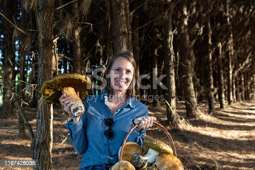 Image of a woman carrying a basket with wild Porcini mushroom (Boletus edulis) at a pine tree forest