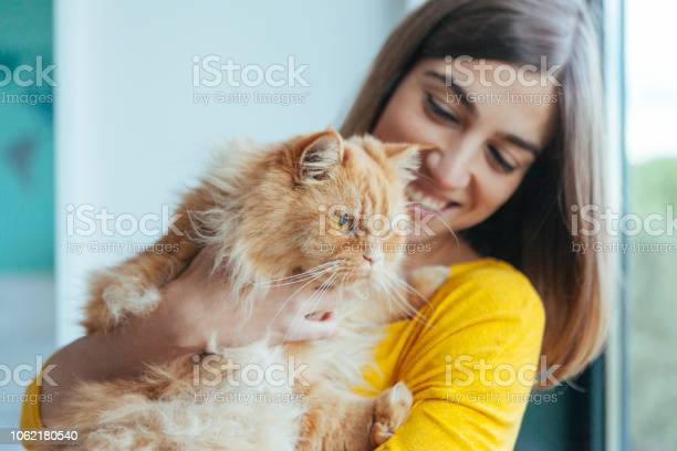 Happy healthy cat with lots of love picture id1062180540?b=1&k=6&m=1062180540&s=612x612&h=bqulhvctwdokcqbmclq0m21e3napgz3addh3swrhlrm=