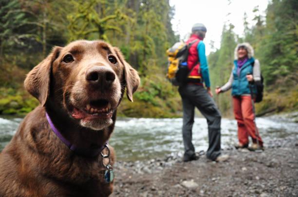 Glücklich Wandern Hund – Foto