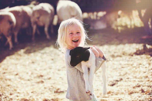 Happy holding lamb Smiling Girl Sideways A beautiful smiling 4-5-year-old young girl holding a young black and white lamb in her arms whilst smiling in a sheep pen with other sheep and straw Koo Valley Montagu Klein Karoo Western Cape South Africa livestock stock pictures, royalty-free photos & images