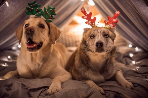 Happy holidays stock photo