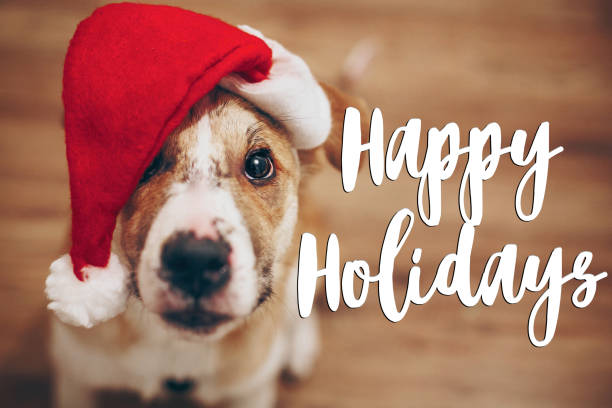 happy holidays text, seasonal greetings card sign. dog in santa hat.  cute brown dog in red hat sitting in stylish room with adorable look. happy holidays - happy holidays stock pictures, royalty-free photos & images