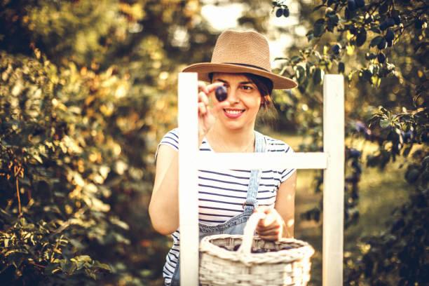 glücklich in meine pflaume-obstgarten - pflaumen jeans stock-fotos und bilder
