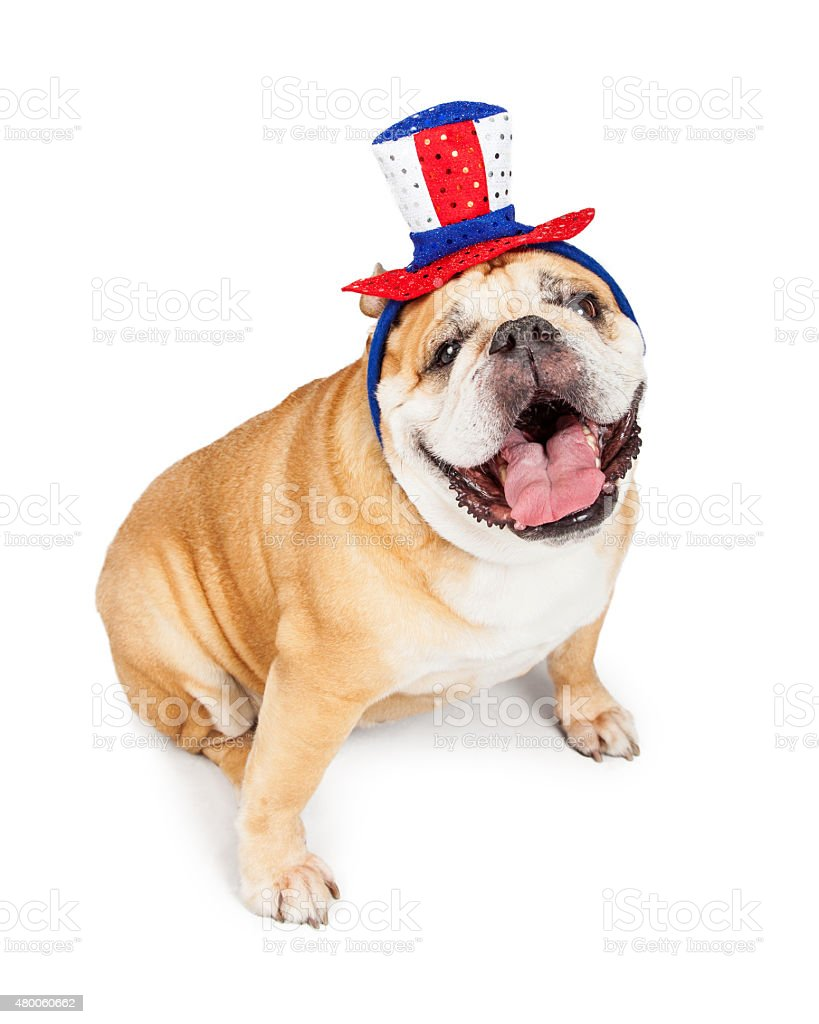 Happy Independence Day Bulldog stock photo