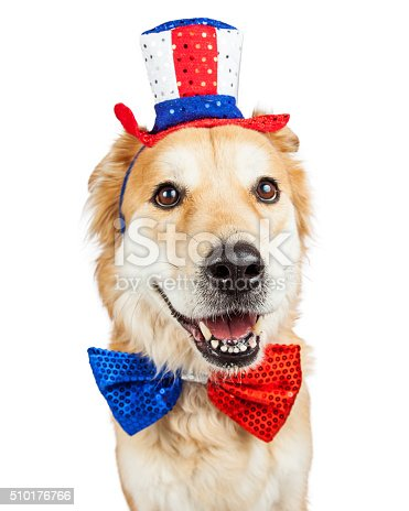 istock Happy Independence Day Large Dog 510176766