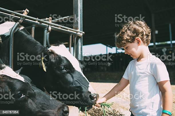 Happy kid feeding cows picture id545787054?b=1&k=6&m=545787054&s=612x612&h=4d vflaftqp1tj2jfbtmtefo1b eatwio2kvl2sb2jw=