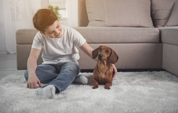 Happy kid playing with puppy in house stock photo