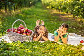 Harvesting concept. Happy kids lying on carpet on apple-trees alley, with big basket with apples on the side.