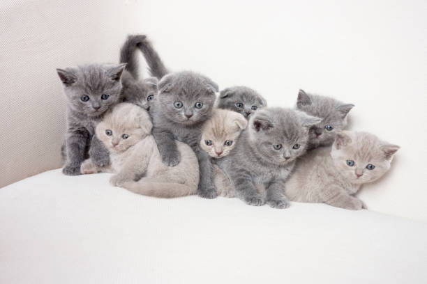 Happy kitten family picture id487567929?b=1&k=6&m=487567929&s=612x612&w=0&h=wkqw x2ehoty3s8fh6yfwxdgd34jtrmkookrbgo3568=