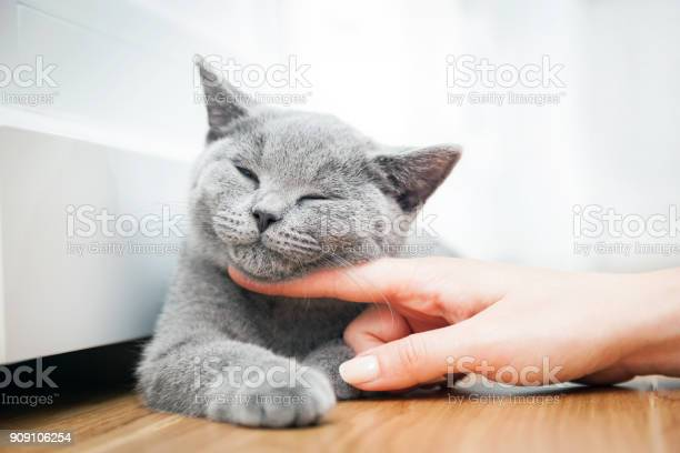 Happy kitten likes being stroked by womans hand picture id909106254?b=1&k=6&m=909106254&s=612x612&h=nbuugzaxromvr 4zdvwy7yqgvruqhprqgneh6qiag7u=