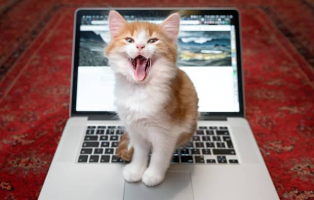 Happy kitten sitting on laptop keyboard picture id938787290?b=1&k=6&m=938787290&s=612x612&w=0&h=a 73lcwmplo8tstebdf3q6pulbybav6r5fxjfow0jei=