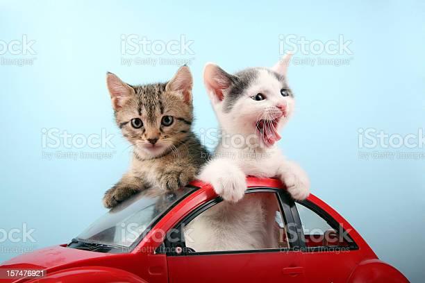 Happy kittens on vacations picture id157476921?b=1&k=6&m=157476921&s=612x612&h=hyltdys8nbiblunx4ocx48bux9egkfmv9ftk3wftasi=
