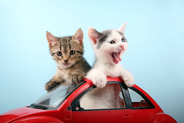 Happy kittens on vacations stock photo