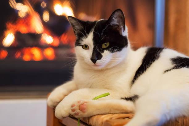 Happy kitty in front of a fireplace picture id880541052?b=1&k=6&m=880541052&s=612x612&w=0&h=kdfhtmbhjfpjjx61j909i24kdlt w35vwdn3bhwkyd0=