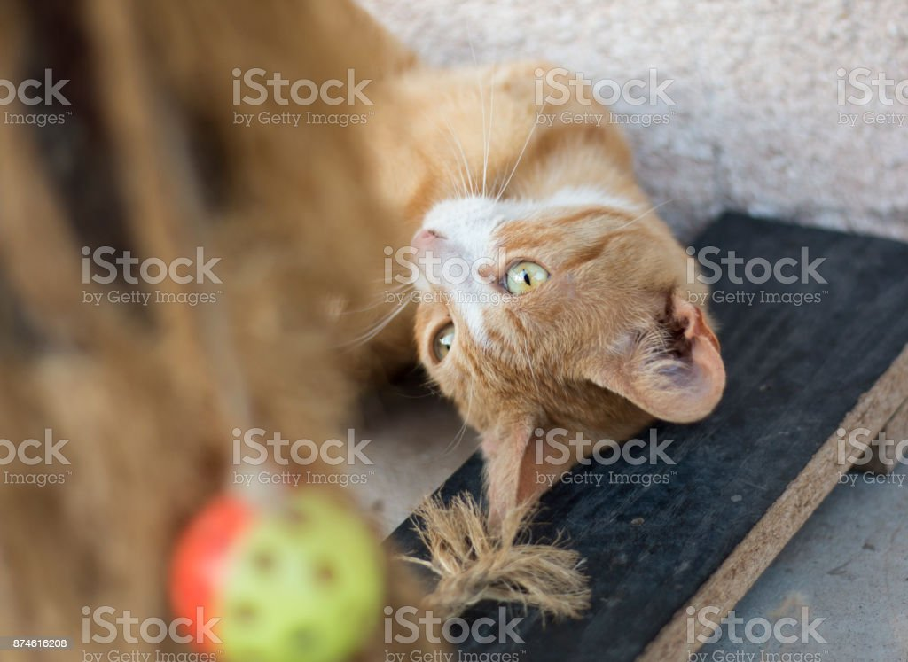 Happy kitty lying stock photo
