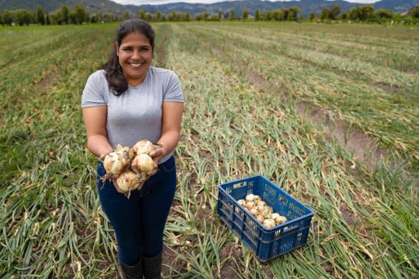 Happy Latin American woman harvesting onions at a farm stock photo
