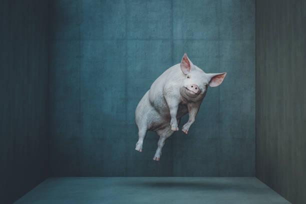 Glücklich schwebendes Schwein – Foto