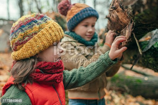 istock Happy little boy and girl exploring autumn nature in forest 1173845845