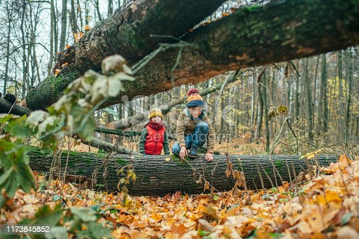 515278306 istock photo Happy little boy and girl exploring autumn nature in forest 1173845852