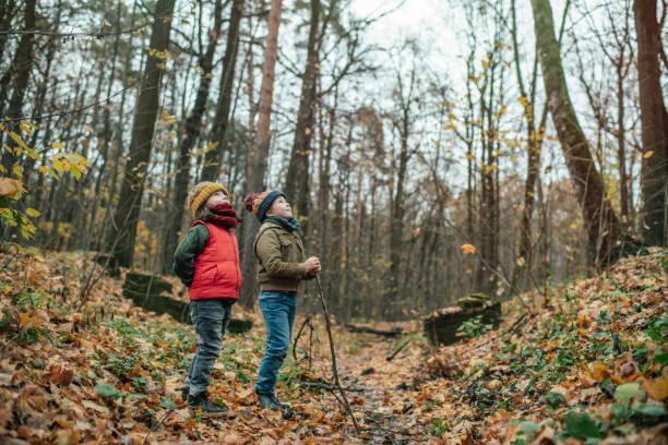 Happy little boy and girl exploring autumn nature in forest picture id1173845911?b=1&k=6&m=1173845911&s=612x612&w=0&h=b3jtazlydneiz8efdscdztjjy3r5lx6pnkjxhbxp14i=