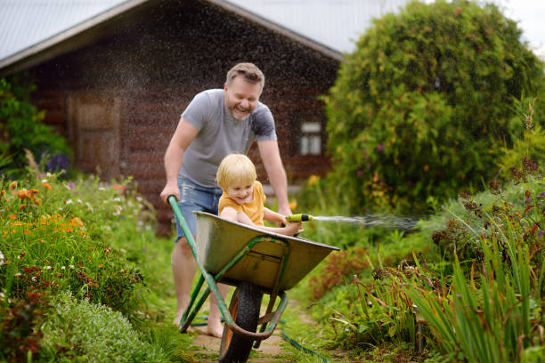 Happy little boy having fun in a wheelbarrow pushing by dad in domestic garden on warm sunny day. Child watering plants from a hose. stock photo