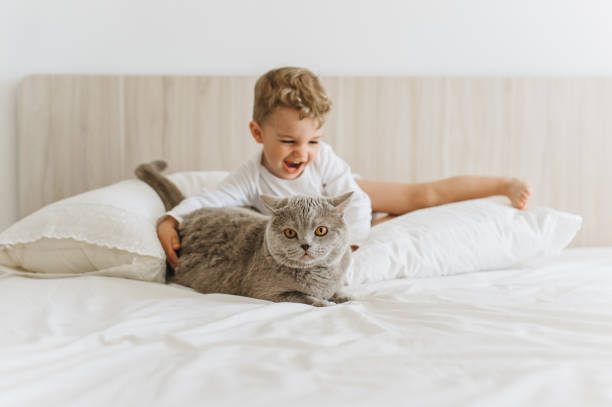 Happy little child playing with grey british shorthair on bed at home picture id1007422350?b=1&k=6&m=1007422350&s=612x612&w=0&h=c2xtfyqibqbs5lgp3w wvtcfsd fgjnyz6wsf aogki=