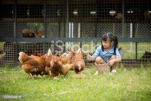 Happy little girl feeding chickens in front of chicken farm. Summer activities for kids.