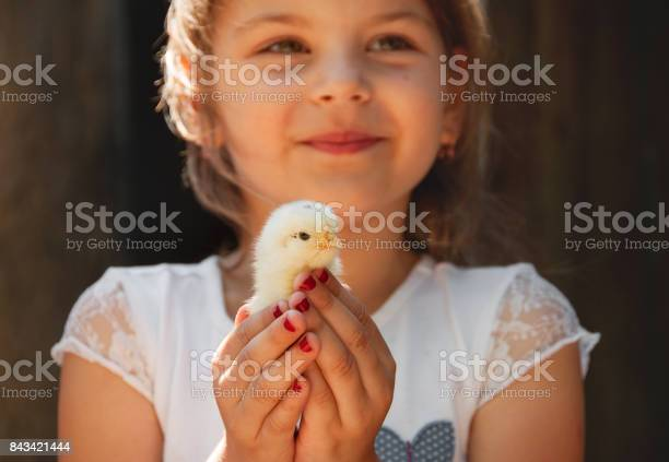Happy little girl holds a chicken in his hands child with poultry picture id843421444?b=1&k=6&m=843421444&s=612x612&h=wk7rn4d khului3pngiodrk9lwa5uid 6lij8 gqe20=