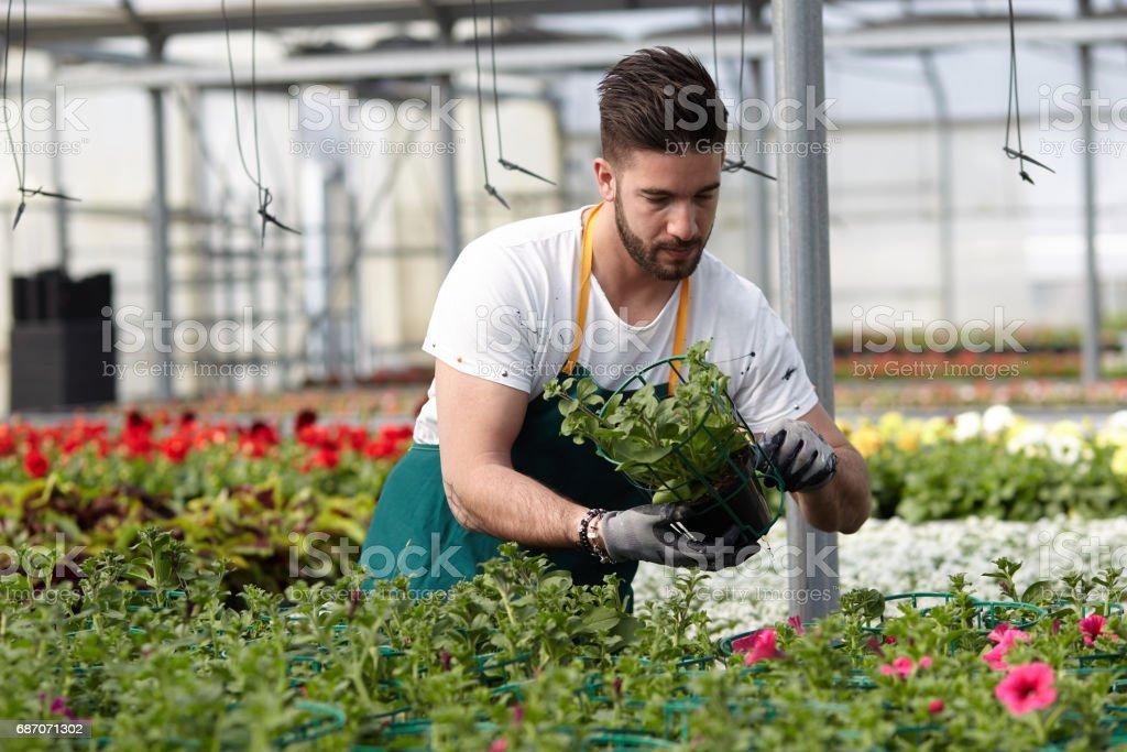 happy male nursery worker trimming plants in greenhouse Lizenzfreies stock-foto