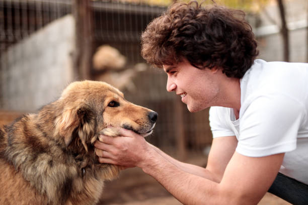 Happy male volunteer petting homeless dog stock photo