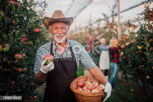 1056015258 istock photo Happy man holding a basket of apples 1056015342
