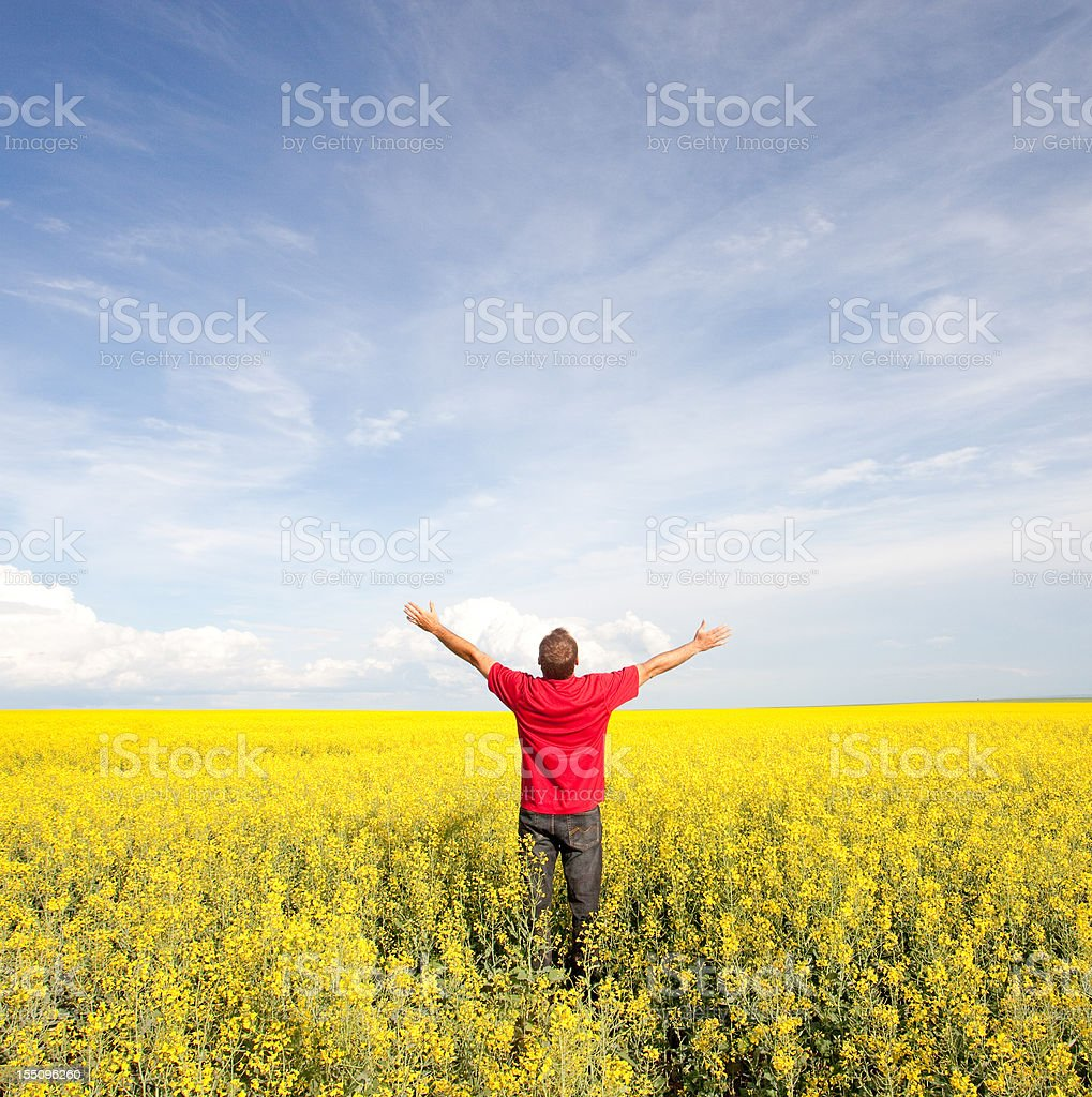 Happy Man in Canola Field royalty-free stock photo