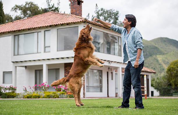 Happy man training his dog picture id608004402?b=1&k=6&m=608004402&s=612x612&w=0&h=rzjfml8nxuiufp2yv9 yw5e2ciabb   d542vz bpog=